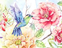 Colibri wallpapers