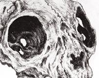 Cat Skull 1