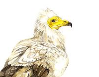 Animals- science illustration