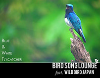Bird Song Lounge Feat. Wild Bird Japan