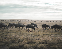 Serengeti, Land of Hope