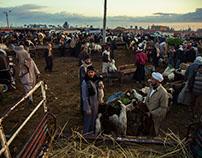 Belqas Market