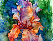 Iris. Watercolor. Free copy by Ann Mortimer