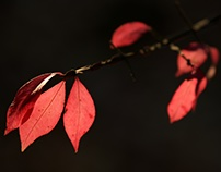 Good-bye, Fall !