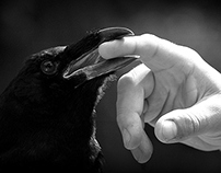 Man and Raven