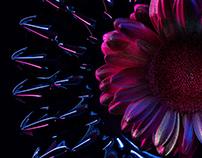 Ferro Flowers | Desktopography 2020