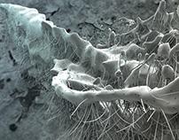Organic Liquid Abstracts