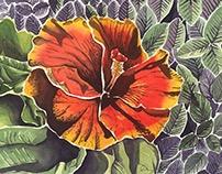 The Vibrant Hibiscus