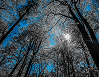 Spring Forest ▲ Blue
