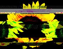 Interactive Glitch Flowers
