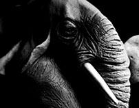 Ivory seller- (sculpture)