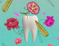 КАССИОПЕЯ «Зуб Мудрости»