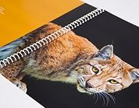 Lynx Design Solutions