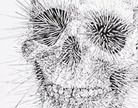 Urchin Skull