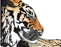 Animal Drawings 2014
