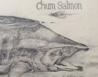 Chum Salmon - older work
