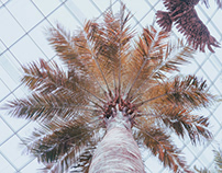 Travel Photography: Cities and Plants