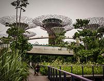 Super Tree Singapore 2015