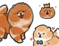 Pomeranian babies