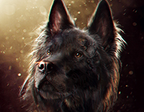 Dogs Concept Photobash in 6 hours