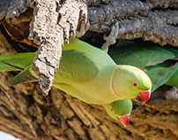 Delta Park Birds