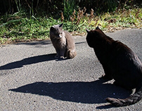 Tashiro cat island -猫島・田代島