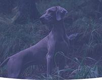 Belgian Kennel Club identity & website