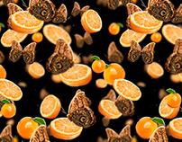 """""""Owls"""" butteflies & Oranges"""