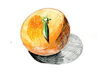 Fruit and veg A5 III