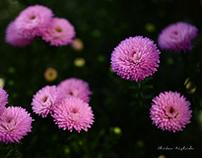 FLOWERS...in Kumamoto city
