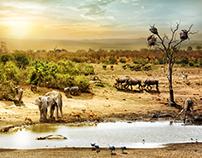 South African Dream Safari
