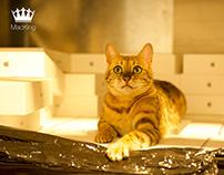 MacKing Social Media, Roy the Cat Campaign