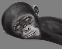 Baby chimp drawing wint Cintiq 27QHDT