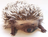 The sleeping hedgehog
