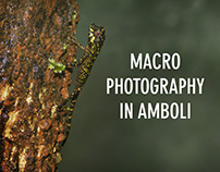 Macro Photography in Amboli
