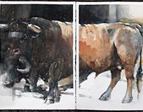 Two Bulls Diptych 2 x 76 x56 cm