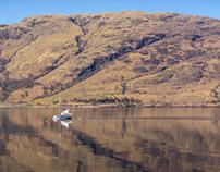 Sunswept Scotland