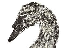 Swan: Static