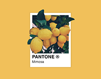 My Favorite Pantone Colors