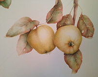 Quince. Watercolor
