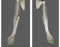Spring Semester Progress - Virtual Reality Arm / Thesis