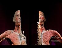 HUMAN BODY EXHIBITION - VOL. 1