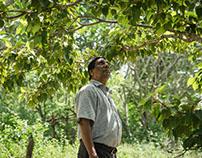 The Australian Aid Program - Forestry