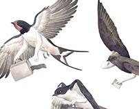 Birds illustration - Migration