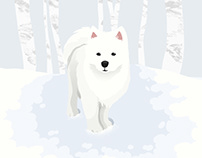 Samoyed in the Snow