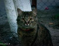 Cat ❤️