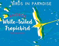 Bahama Bird Postcards
