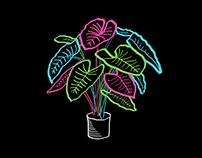 Ilustración Planta Alocasia