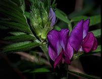 Deep purple...