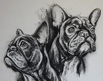 French Bulldog Charcoal Study